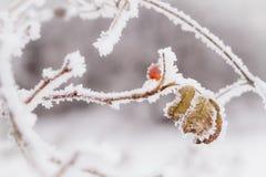 предпосылка легкая редактирует природу изображения для того чтобы vector зима Стоковое Изображение RF