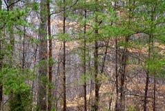 Предпосылка леса леса зимы стоковая фотография rf