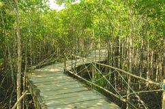 Предпосылка леса мангровы естественная и деревянная моста Стоковое фото RF