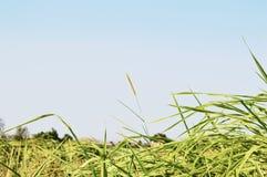 ПРЕДПОСЫЛКА ЛЕСА РАСТИТЕЛЬНОСТИ КРАСОТЫ ПРИРОДЫ Стоковая Фотография RF