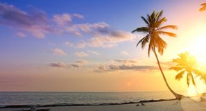 Предпосылка летних каникулов искусства; Пальма на тропическом заходе солнца пляжа стоковые фотографии rf