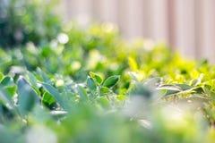 Предпосылка листвы фото зеленая Стоковые Изображения