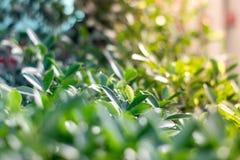 Предпосылка листвы фото зеленая Стоковые Изображения RF
