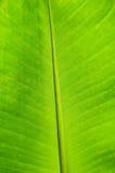 Предпосылка листьев банана Стоковое Фото