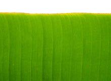 Предпосылка листьев банана Стоковые Фотографии RF