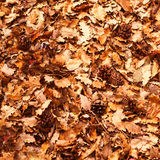 Предпосылка листьев осени в парке осени Внешняя концепция осени Стоковые Фото