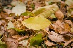 предпосылка листьев осени листьев осени в парке на земле Стоковые Изображения