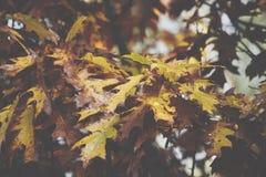 Предпосылка листьев осени в парке осени Рамка природы Стоковое Фото