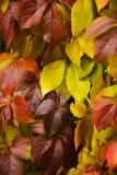 Предпосылка листьев осени желтый цвет вала листьев падения предпосылки осени Стоковое Изображение RF