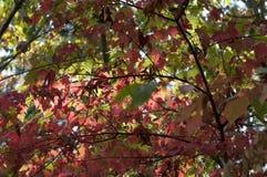 Предпосылка листьев осени листопада Стоковые Изображения