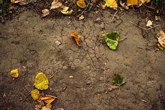 Предпосылка листьев осени на том основании стоковая фотография rf