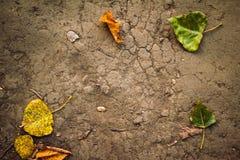 Предпосылка листьев осени на том основании стоковое изображение rf