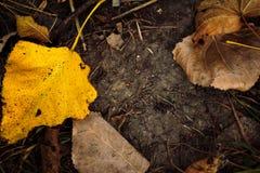 Предпосылка листьев осени на том основании стоковые фотографии rf