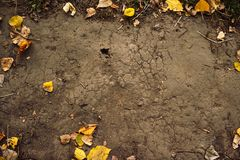 Предпосылка листьев осени на том основании стоковое фото