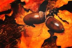 Предпосылка листьев осени с жолудями Красивое красочное marple Стоковое Изображение