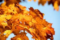 Предпосылка листьев осени стоковые фотографии rf
