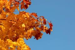 Предпосылка листьев осени стоковая фотография