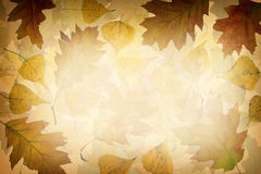 Предпосылка листьев осени Стоковые Изображения RF