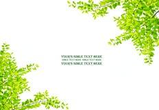 Предпосылка листьев Стоковое Изображение