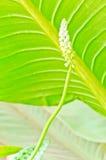 Предпосылка листьев Стоковые Фото