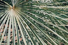 Предпосылка лист округлой формы Стоковые Фото
