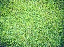 Предпосылка лужайки полей для гольфа зеленой текстурированная картиной Стоковое Изображение RF