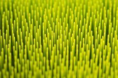 Предпосылка макроса абстрактная зеленая Стоковые Фото