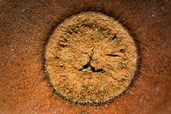 Предпосылка макроса крышки жолудя стоковое фото