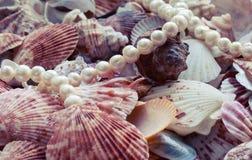 Предпосылка моря с красочными раковинами различных форм и размера стоковая фотография