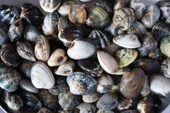 Предпосылка моря с seashells стоковое изображение