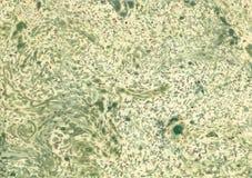 Предпосылка мраморизованной бумаги с различными зелеными цветами Стоковая Фотография