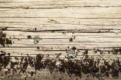 Предпосылка мха и древесины, для рамок, для предпосылки, для photoshop Стоковые Фото
