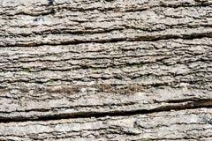 Предпосылка наслоенного утеса - камня Lessinia Италии стоковое изображение rf