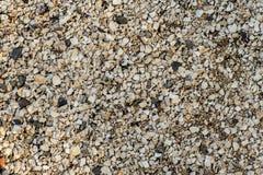 Предпосылка небольших раковин на береге моря r стоковая фотография