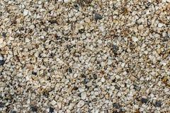Предпосылка небольших раковин на береге моря r стоковое фото rf