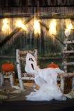 Предпосылка ночи Halloween Стоковые Фото