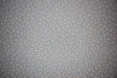 Предпосылка обоев в малом орнаменте белого цветка на серой голубой предпосылке стоковые фотографии rf