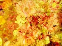 Предпосылка обоев цветка гвоздики стоковые изображения rf