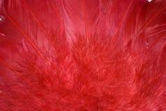 предпосылка оперяется красный цвет Стоковая Фотография RF