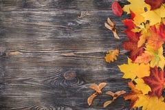 предпосылка осени выходит желтый цвет стоковые изображения rf