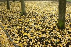 Предпосылка осени желтого цвета выходит лежать на пол Стоковая Фотография RF