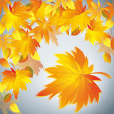 Предпосылка осени, желтые листья - установьте для текста Стоковое Фото