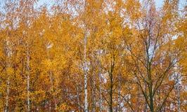 предпосылка осени золотистая Стоковая Фотография