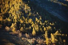 Предпосылка осени картины леса осени на наклоне горы в лучи заходящего солнца в желтом взгляде тонов от Стоковое Изображение