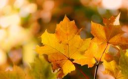 Предпосылка осени листвы стоковая фотография