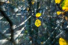 Autumn background of last leaves after rain Стоковое Изображение