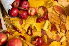 Предпосылка осени от желтых листьев, яблок, тыквы Сезон падения, еда eco и концепция сбора Стоковое Изображение