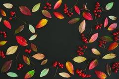 Предпосылка осени сезонная темная Стоковое Фото