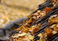 Предпосылка осени соломенной крыши на которой упаденные желтые листья стоковое фото rf