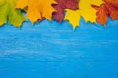 Предпосылка осени с листьями падения Стоковая Фотография